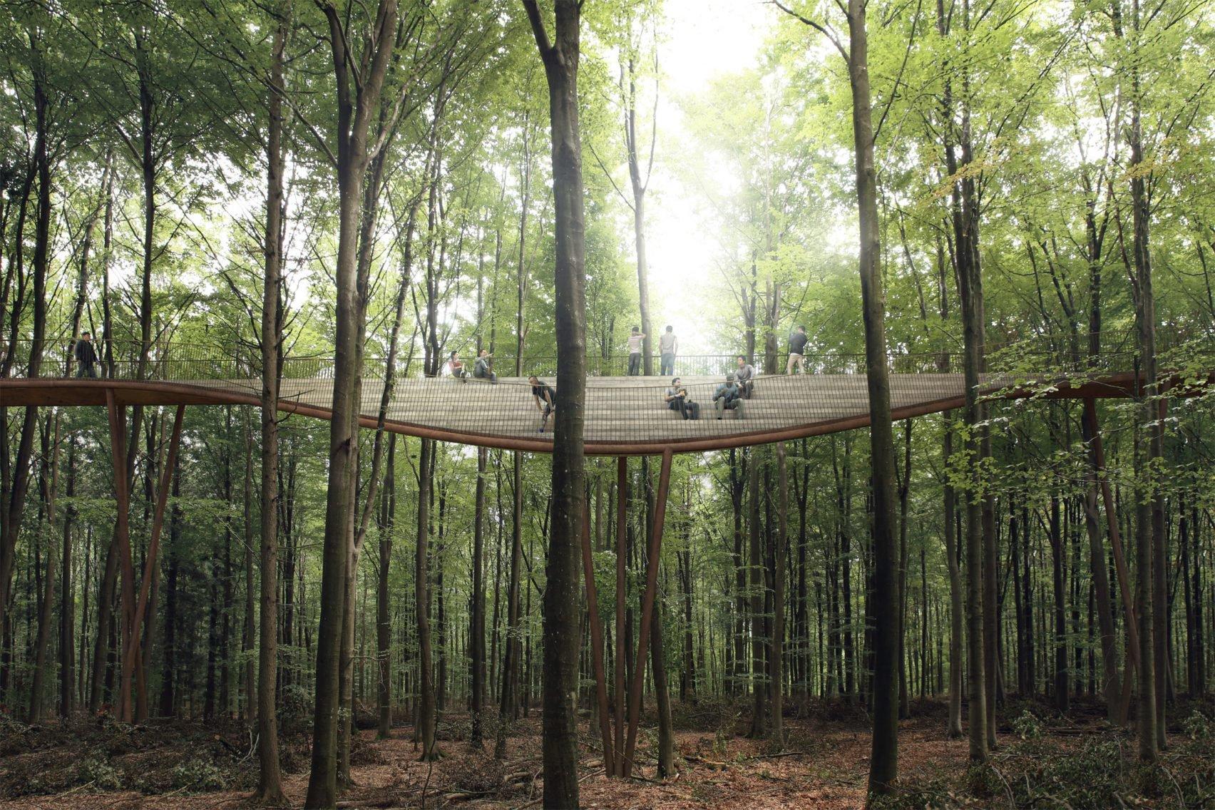 treetop experience 6